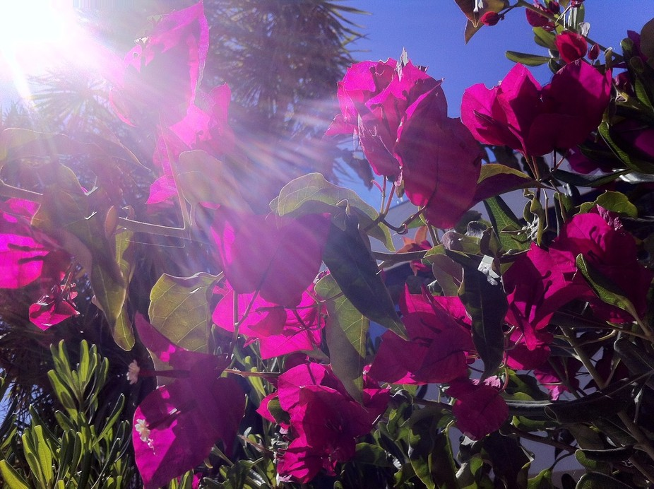 Just the effect of sunlight in the flowers.