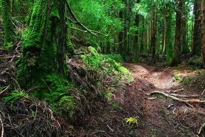 Deep forest on the Azores Islands