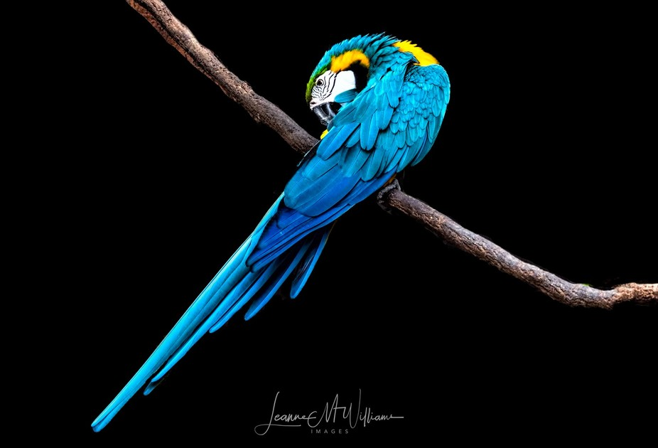 Such a magnificent and brightly coloured bird :)   https://www.facebook.com/leannemwilliamsimages/