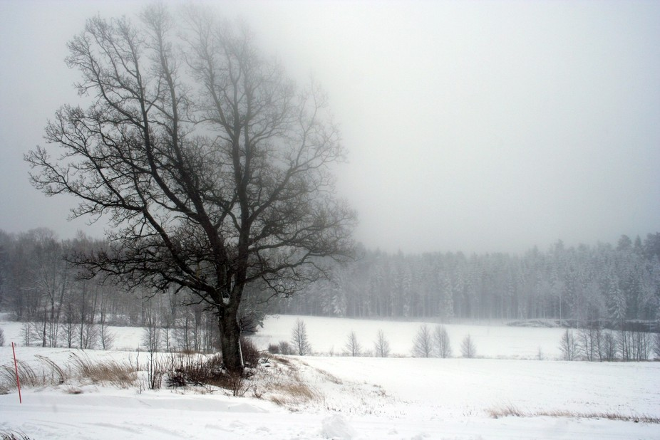 Winters are cold and long on Swedens largest island Orust where I lived for 2 years. I took this ...