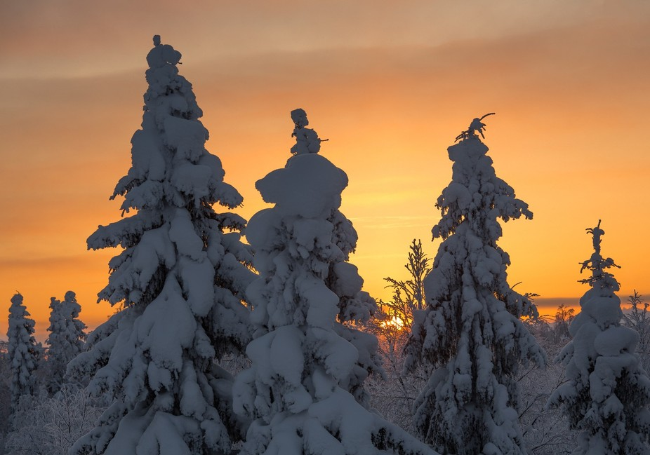 Sun is setting behind the trees that are covered by heavy snowcaps near the northside polarline i...