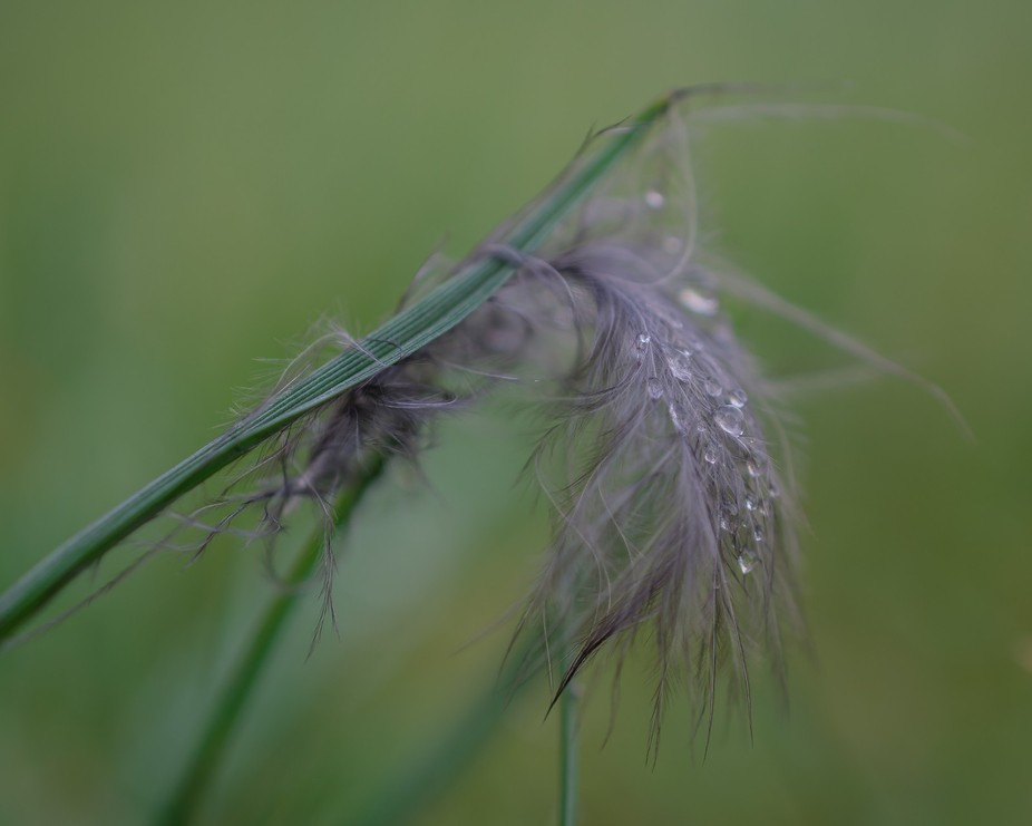 Jewelled feather in the grass