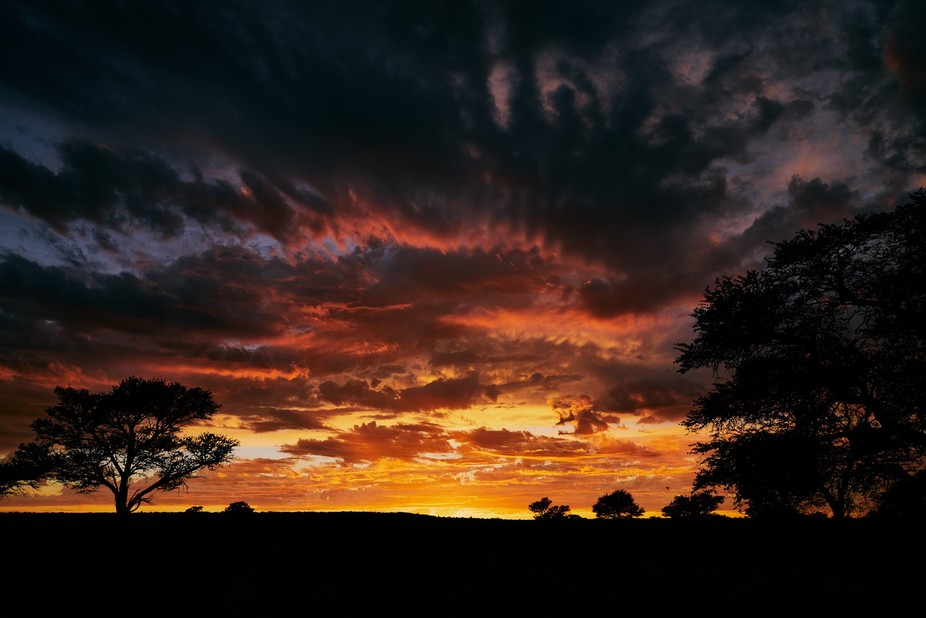 Morning Drive in the Kgalagadi Transfrontier Park with spectacular Sunrise.