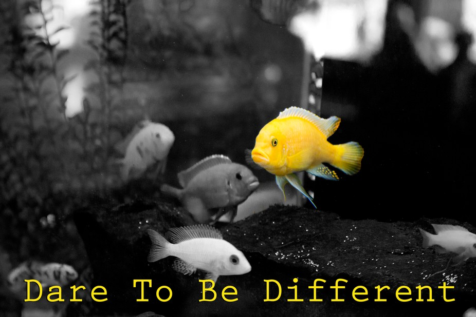 Project i did with a group of fish.....to inspire you!  I used Photoshop to do this....