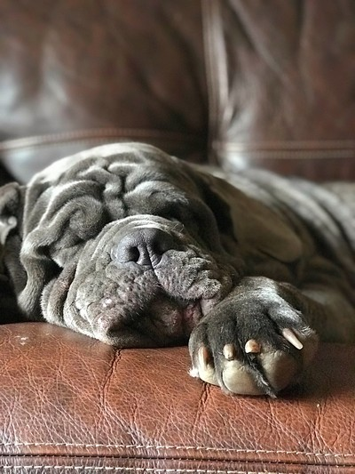 Afternoon naps